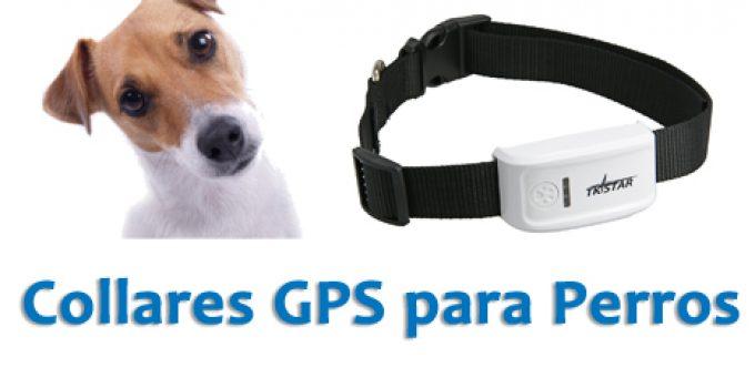gps-para-perros